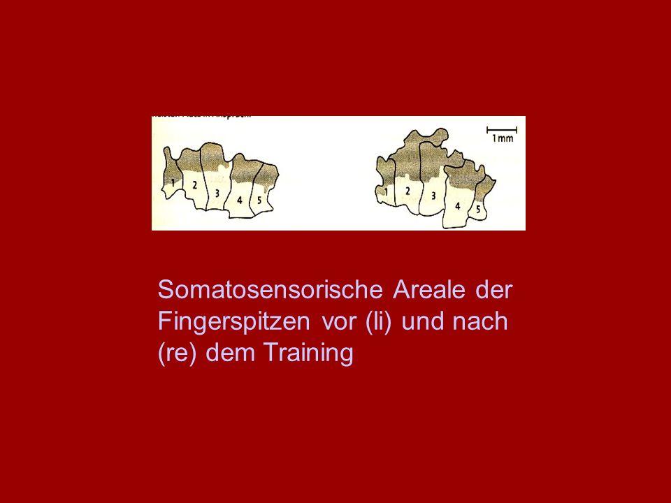 Somatosensorische Areale der Fingerspitzen vor (li) und nach (re) dem Training