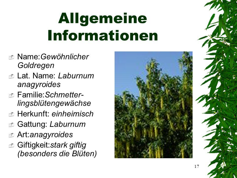 16 Gewöhnlicher Goldregen Laburnum anagyroides