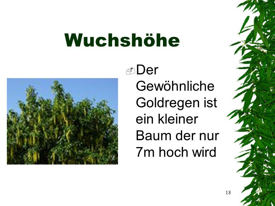 17 Allgemeine Informationen  Name:Gewöhnlicher Goldregen  Lat.