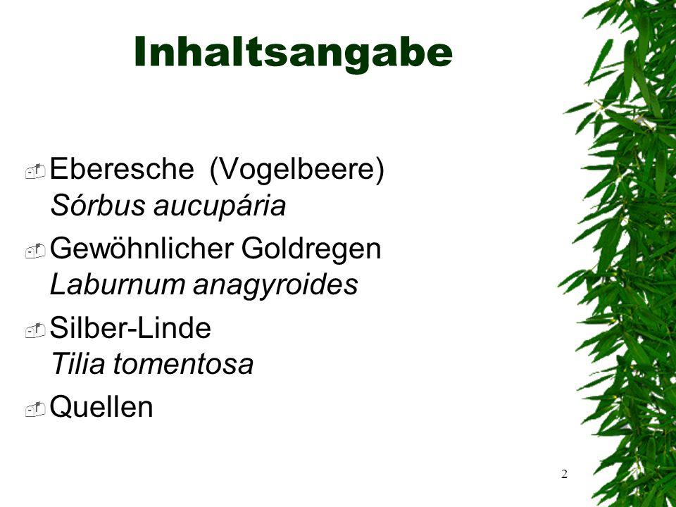 1 Artenmonografie Von Benedikt Wagner 8a September 2006
