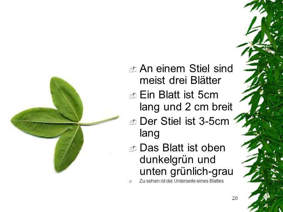 19 Das Blatt  Blattanordnung: wechselständig  Blattaufbau: zusammengesetzt  Blattform:gefingert  Blattrand:ganzrandig  Zu sehen ist die Vorderseite eines Blattes