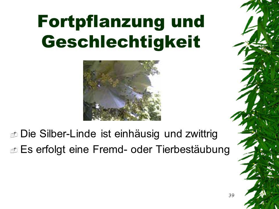 38 Gefährdung  Die Silber-Linde ist durch folgende Krankheiten gefährdet:  Blattsprenkelung  Blattfleckenkrankheit  Riesenblattfleckenkrankheit  Krebs