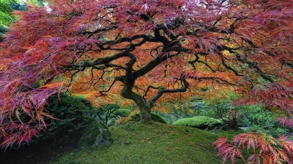 Die vielen Verzweigungen und verschiedenen farbigen Blätter des Baumes sind ein Symbol für die Schönheit der Natur, der Ruhe und Frieden, und das ist