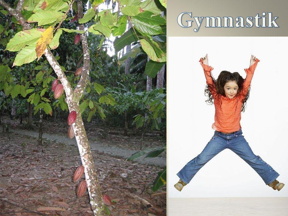 Kakaobaum Die Kakaobäume können wir in Amerika, in Mexico, in Indien sehen.
