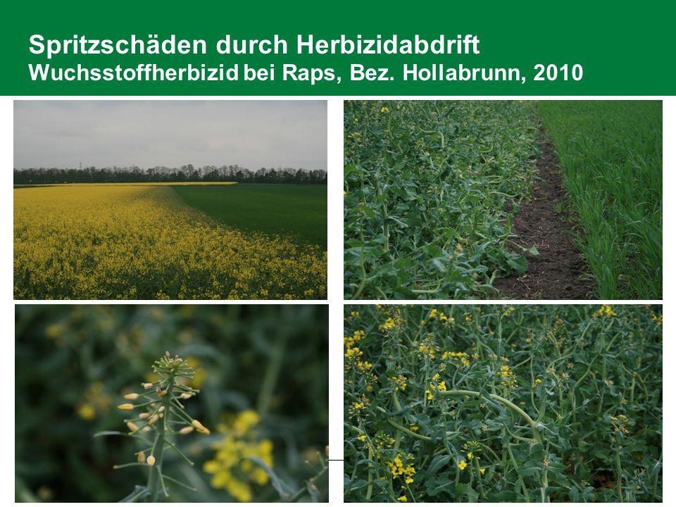 2.6 Pflanzenschutz Spritzschäden durch Herbizidabdrift Wuchsstoffherbizid bei Raps, Bez.
