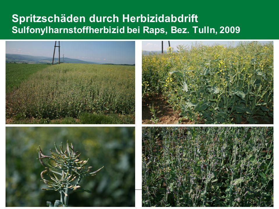 2.6 Pflanzenschutz Spritzschäden durch Herbizidabdrift Sulfonylharnstoffherbizid bei Raps, Bez.