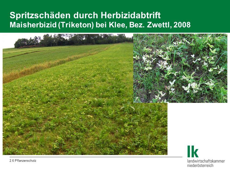 2.6 Pflanzenschutz Spritzschäden durch Herbizidabtrift Maisherbizid (Triketon) bei Klee, Bez.