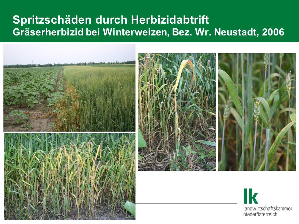 2.6 Pflanzenschutz Spritzschäden durch Herbizidabdrift Glyphosate bei Getreide, Bez.