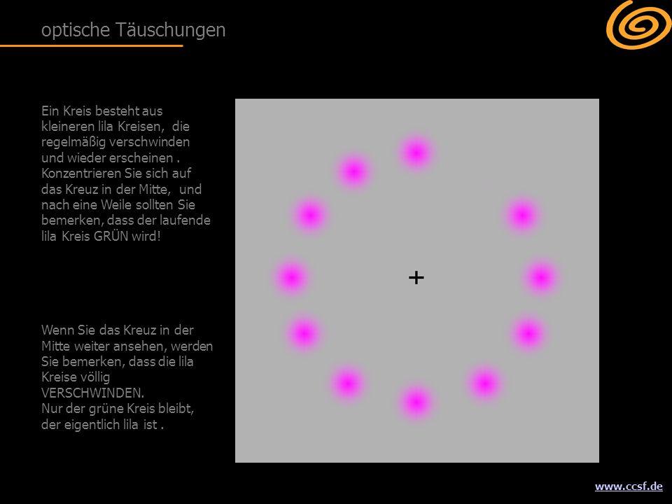 www.ccsf.de Ein Kreis besteht aus kleineren lila Kreisen, die regelmäßig verschwinden und wieder erscheinen.