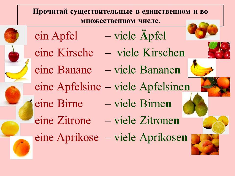 Прочитай существительные в единственном и во множественном числе. ein Apfel– viele Äpfel eine Kirsche– viele Kirschen eine Banane– viele Bananen eine