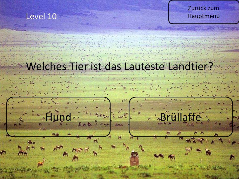 Level 10 Zurück zum Hauptmenü HundBrüllaffe Welches Tier ist das Lauteste Landtier?
