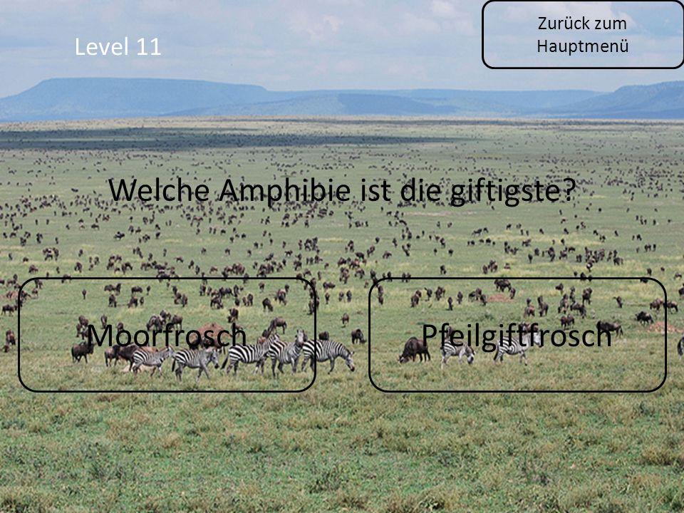Level 11 Zurück zum Hauptmenü MoorfroschPfeilgiftfrosch Welche Amphibie ist die giftigste?