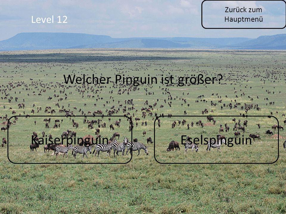 Level 12 Zurück zum Hauptmenü KaiserpinguinEselspinguin Welcher Pinguin ist größer?