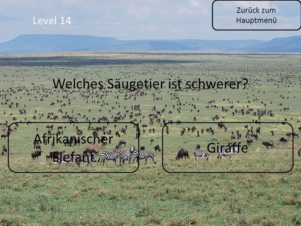Zurück zum Hauptmenü Level 14 Afrikanischer Elefant Giraffe Welches Säugetier ist schwerer?