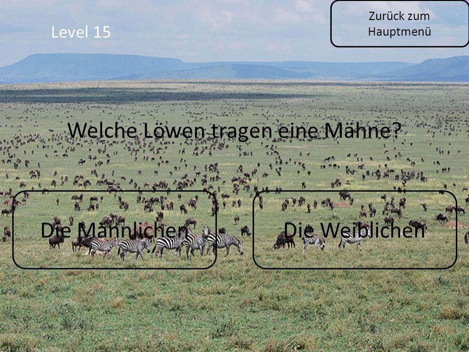 Zurück zum Hauptmenü Level 15 Die MännlichenDie Weiblichen Welche Löwen tragen eine Mähne?