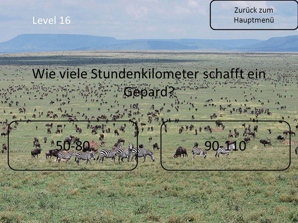 Zurück zum Hauptmenü Level 16 50-8090-110 Wie viele Stundenkilometer schafft ein Gepard?