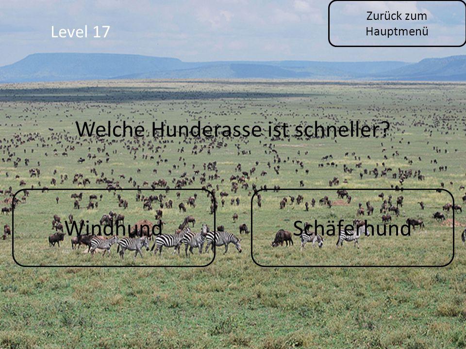 Zurück zum Hauptmenü Level 17 WindhundSchäferhund Welche Hunderasse ist schneller?