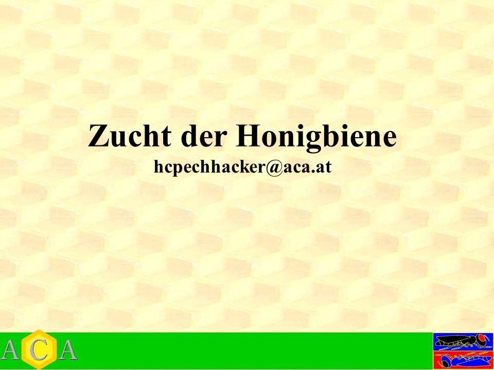 Zucht der Honigbiene hcpechhacker@aca.at