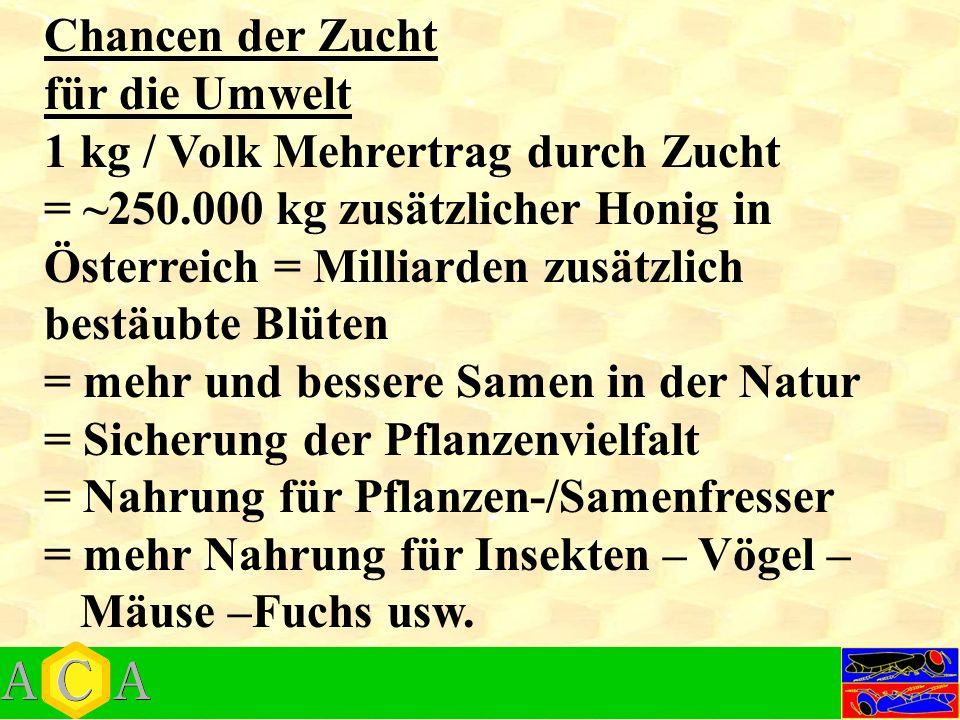 Chancen der Zucht für die Umwelt 1 kg / Volk Mehrertrag durch Zucht = ~250.000 kg zusätzlicher Honig in Österreich = Milliarden zusätzlich bestäubte Blüten = mehr und bessere Samen in der Natur = Sicherung der Pflanzenvielfalt = Nahrung für Pflanzen-/Samenfresser = mehr Nahrung für Insekten – Vögel – Mäuse –Fuchs usw.