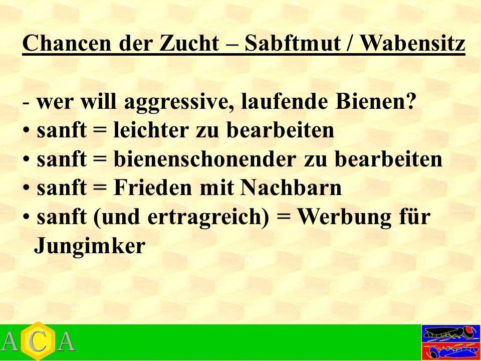 Chancen der Zucht – Sabftmut / Wabensitz - wer will aggressive, laufende Bienen.