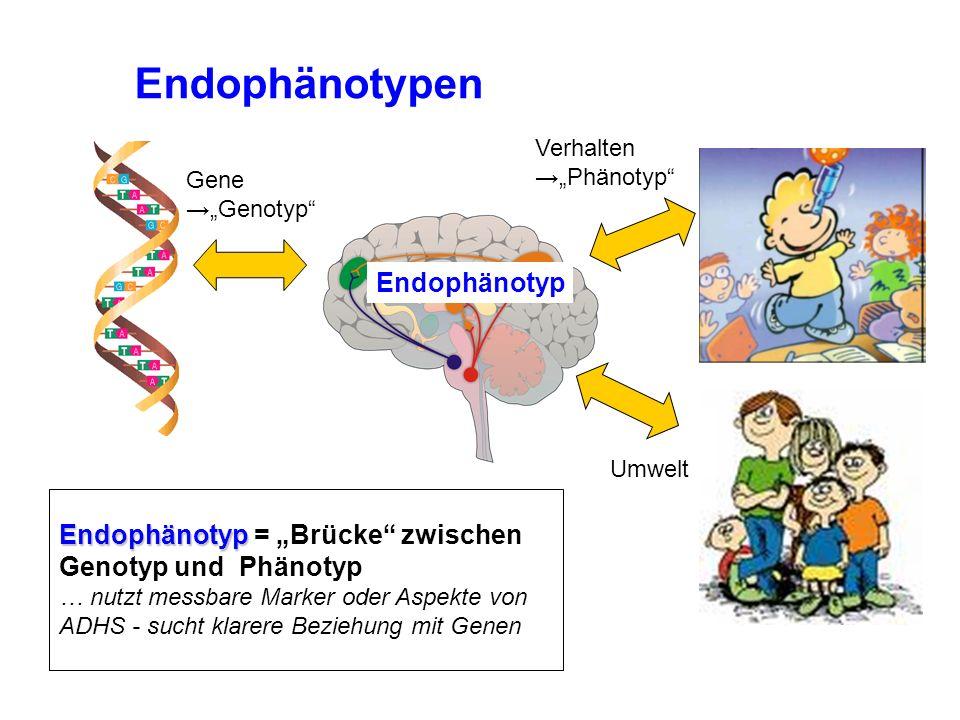 """Gene →""""Genotyp Verhalten →""""Phänotyp Endophänotyp Endophänotyp Endophänotyp = """"Brücke zwischen Genotyp und Phänotyp … nutzt messbare Marker oder Aspekte von ADHS - sucht klarere Beziehung mit Genen Endophänotypen Umwelt"""