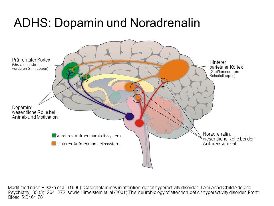 ADHS: Dopamin und Noradrenalin Modifiziert nach Pliszka et al.