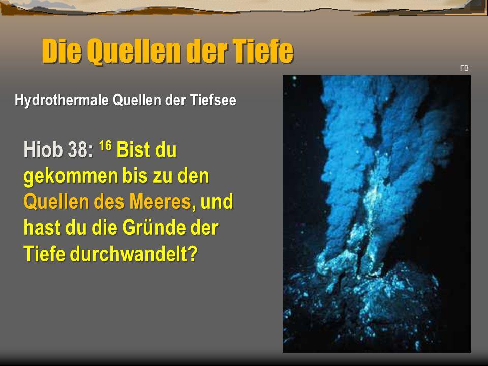 Die Quellen der Tiefe FB Hydrothermale Quellen der Tiefsee Hiob 38: 16 Bist du gekommen bis zu den Quellen des Meeres, und hast du die Gründe der Tief