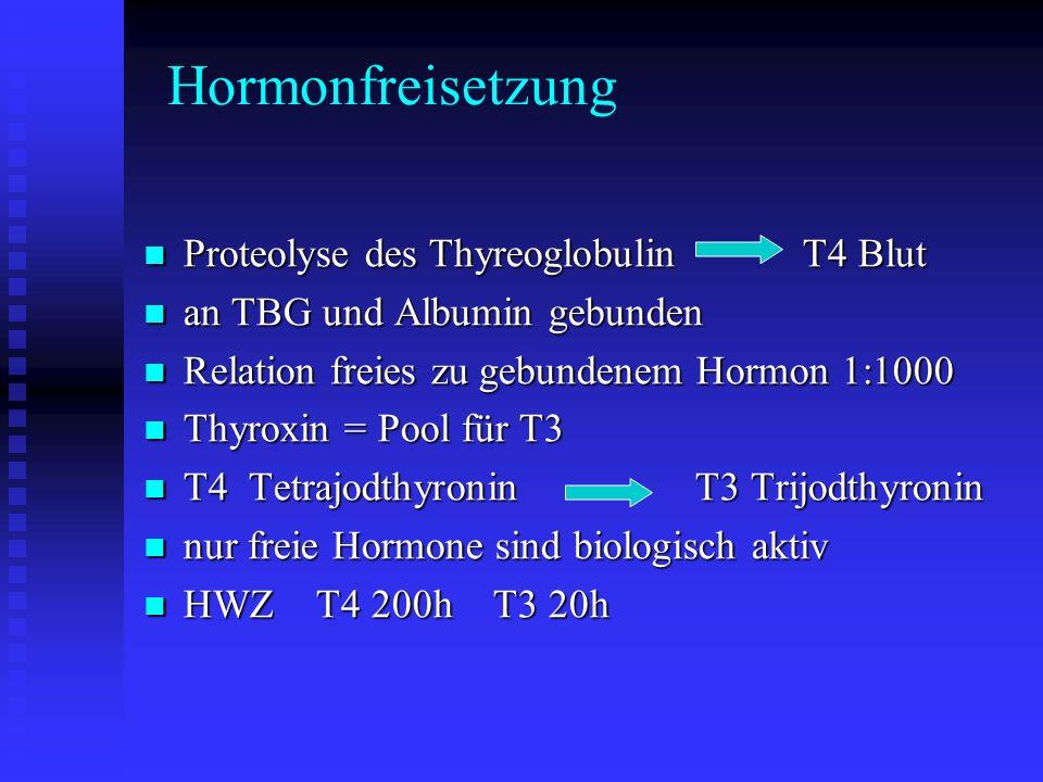 Hormonwirkung Steigerung Grundumsatz und Gesamtstoffwechsel Steigerung Grundumsatz und Gesamtstoffwechsel erhöhter Sauerstoffverbrauch erhöhter Sauerstoffverbrauch Muskelerregbarkeit Muskelerregbarkeit Sensibilisierung für Katecholamine Sensibilisierung für Katecholamine Insulinabbau erniedrigte Glukosetoleranz Insulinabbau erniedrigte Glukosetoleranz Herz Kreislauf Herz Kreislauf Frequenz Kontraktionskraft HMV Frequenz Kontraktionskraft HMV Hemmung der Glykogen und Proteinsynthese Hemmung der Glykogen und Proteinsynthese