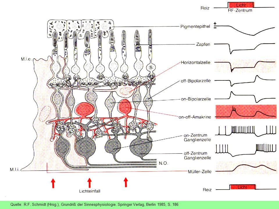 Quelle: R.F. Schmidt (Hrsg.), Grundriß der Sinnesphysiologie. Springer Verlag, Berlin 1985, S. 186