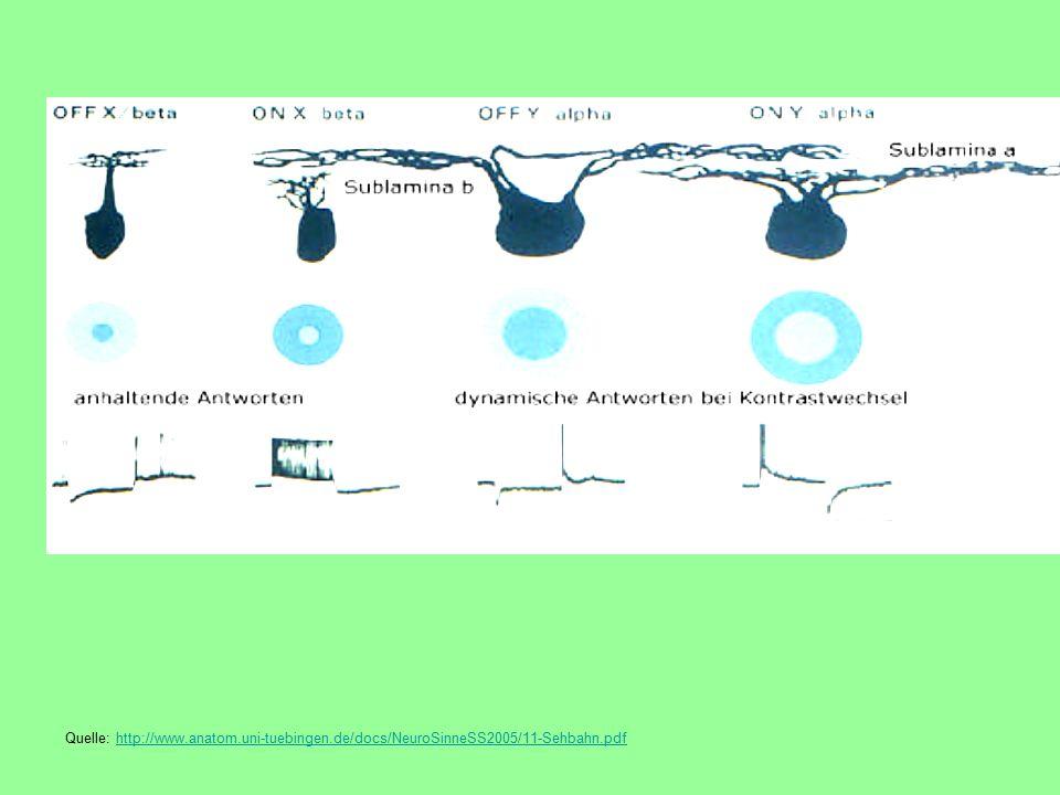 Quelle: http://www.anatom.uni-tuebingen.de/docs/NeuroSinneSS2005/11-Sehbahn.pdfhttp://www.anatom.uni-tuebingen.de/docs/NeuroSinneSS2005/11-Sehbahn.pdf