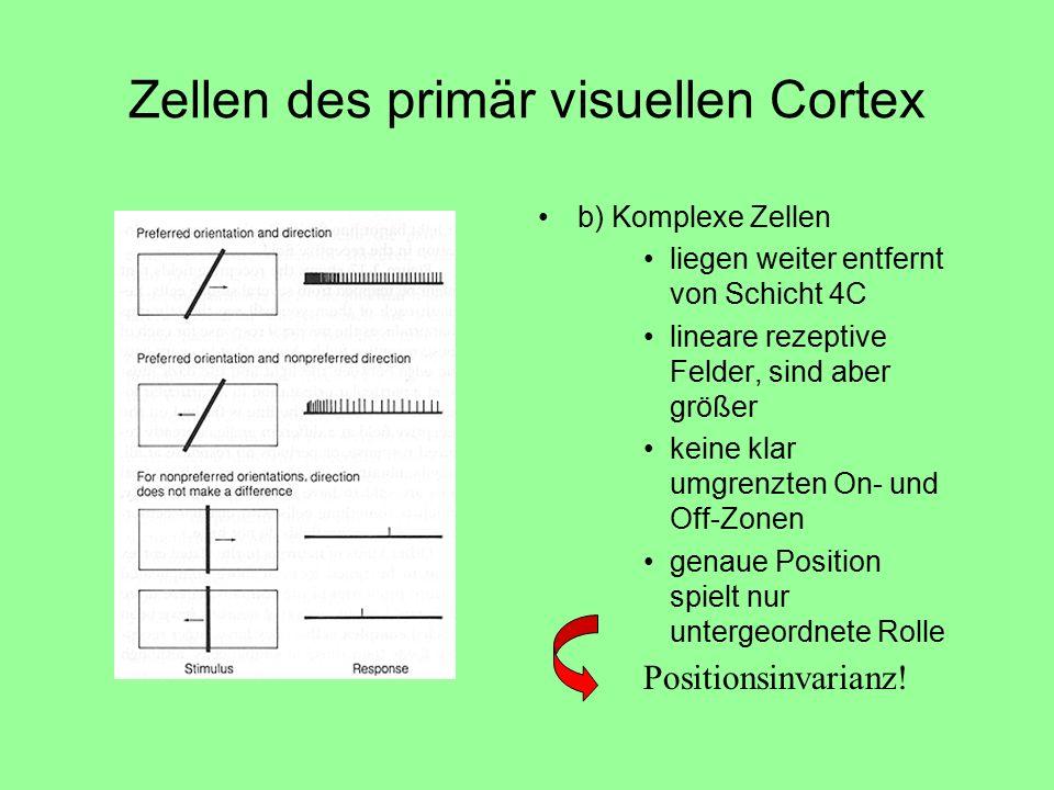 Zellen des primär visuellen Cortex b) Komplexe Zellen liegen weiter entfernt von Schicht 4C lineare rezeptive Felder, sind aber größer keine klar umgrenzten On- und Off-Zonen genaue Position spielt nur untergeordnete Rolle Positionsinvarianz!