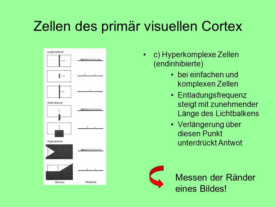 Zellen des primär visuellen Cortex c) Hyperkomplexe Zellen (endinhibierte) bei einfachen und komplexen Zellen Entladungsfrequenz steigt mit zunehmender Länge des Lichtbalkens Verlängerung über diesen Punkt unterdrückt Antwot Messen der Ränder eines Bildes!