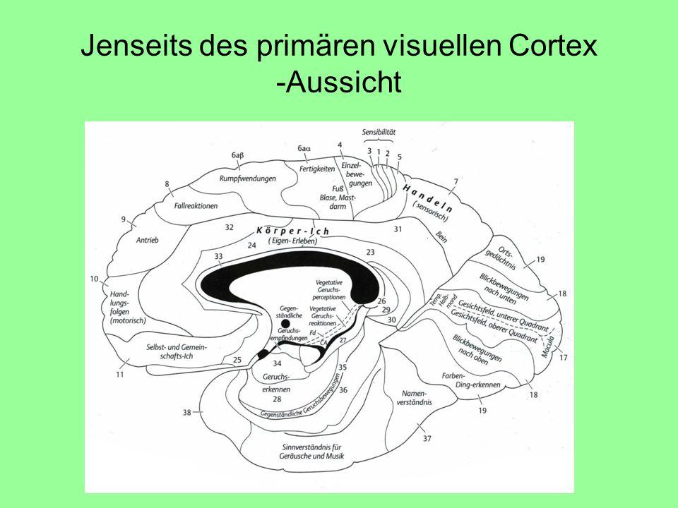 Jenseits des primären visuellen Cortex -Aussicht