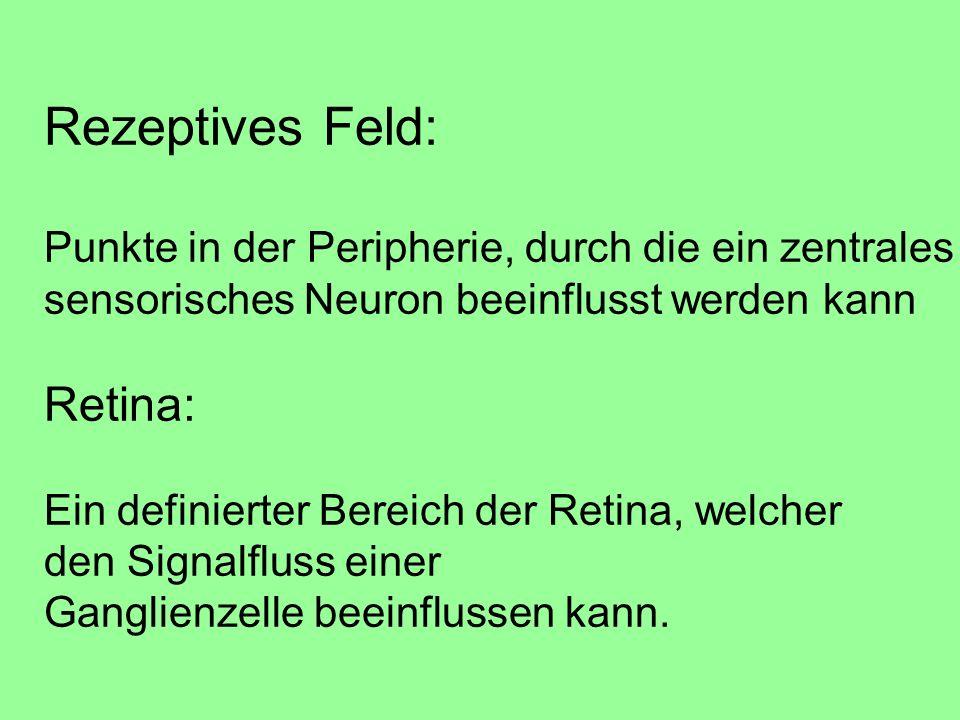 Rezeptives Feld: Punkte in der Peripherie, durch die ein zentrales sensorisches Neuron beeinflusst werden kann Retina: Ein definierter Bereich der Retina, welcher den Signalfluss einer Ganglienzelle beeinflussen kann.