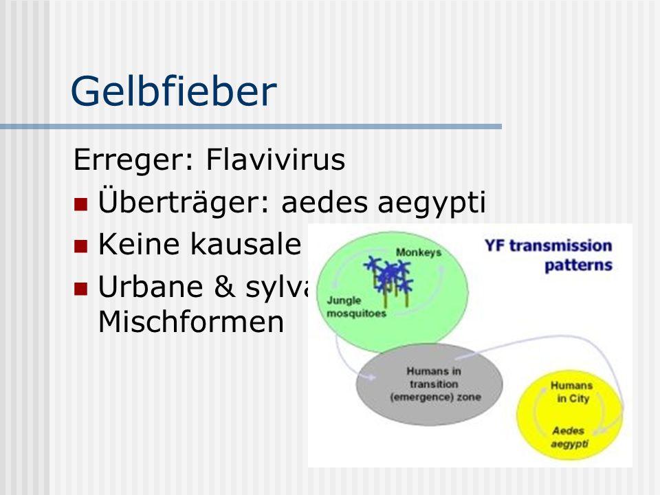 Gelbfieber Erreger: Flavivirus Überträger: aedes aegypti Keine kausale Therapie Urbane & sylvatische Übertragung, Mischformen