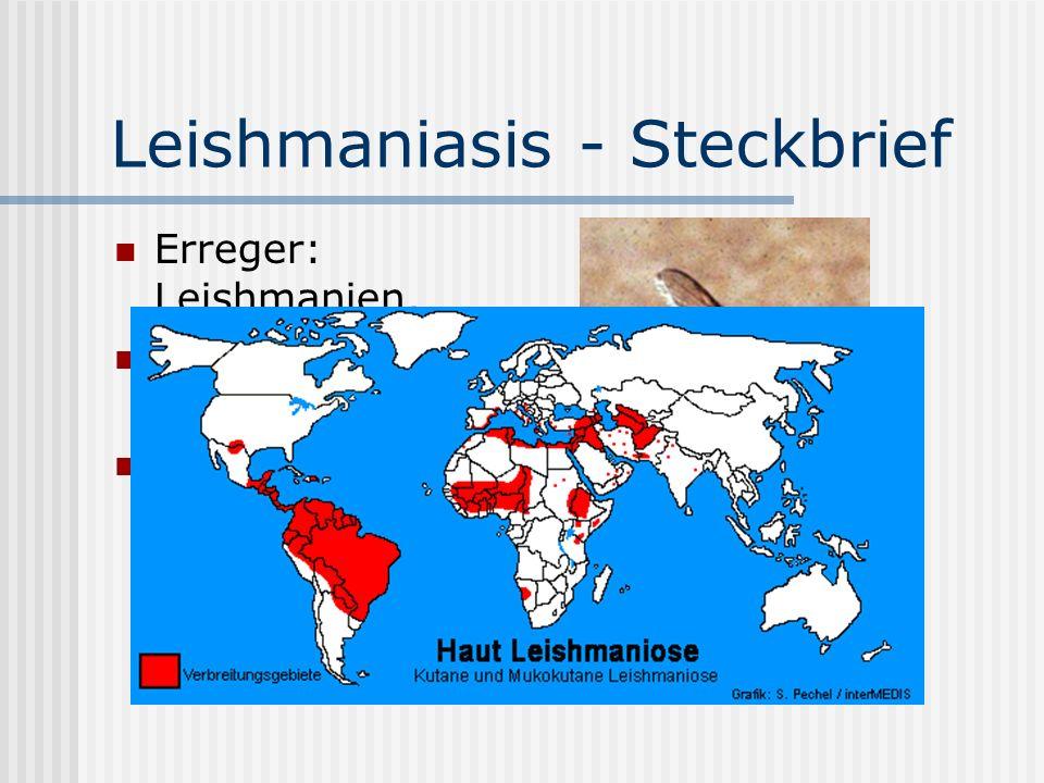 Leishmaniasis - Steckbrief Erreger: Leishmanien, Überträger: Phlebotomen Tropische & subtropische Klimazonen, einschl.