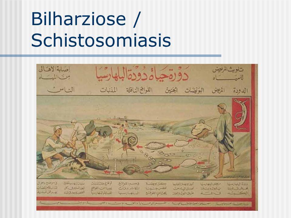 Jede Mikro-/ Makrohämaturie nach Tropenaufenthalt ist Bilharziose- verdächtig.