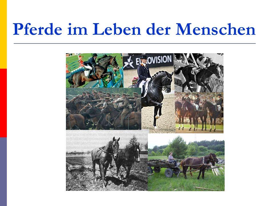 Pferde im Leben der Menschen