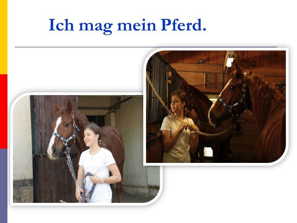 Ich mag mein Pferd.