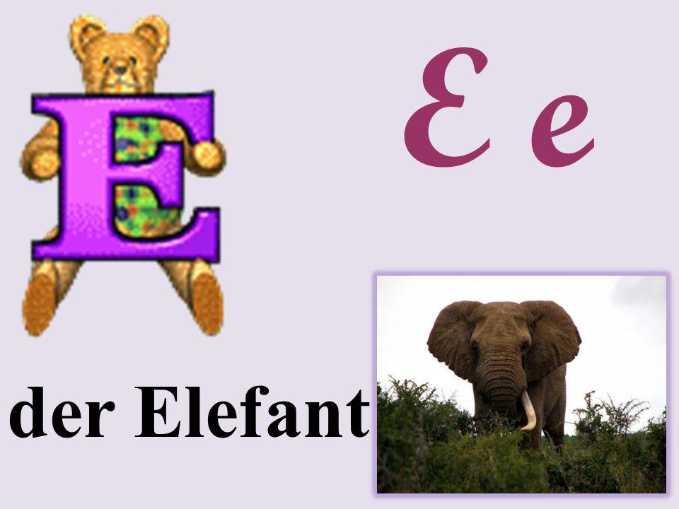 E e der Elefant