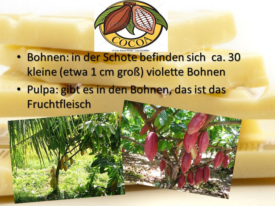 Kakaoernte Haupterntezeit: von November bis Januar Haupterntezeit: von November bis Januar 1.