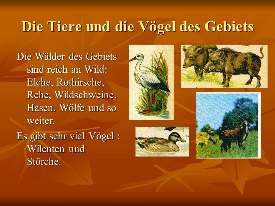 Die Tiere und die Vögel des Gebiets Die Wälder des Gebiets sind reich an Wild: Elche, Rothirsche, Rehe, Wildschweine, Hasen, Wölfe und so weiter.