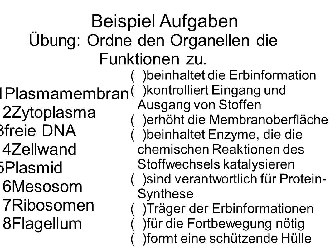 Beispiel Aufgaben Übung: Ordne den Organellen die Funktionen zu. 1Plasmamembran 2Zytoplasma 3freie DNA 4Zellwand 5Plasmid 6Mesosom 7Ribosomen 8Flagell