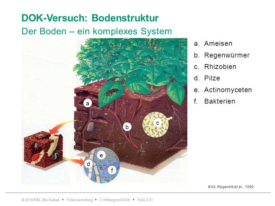 DOK-Versuch: Bodenstruktur Der Boden – ein komplexes System Bild: Reganold et al., 1990 a.Ameisen b.Regenwürmer c.Rhizobien d.Pilze e.Actinomyceten f.Bakterien © 2016 FiBL, Bio Suisse Foliensammlung 3.