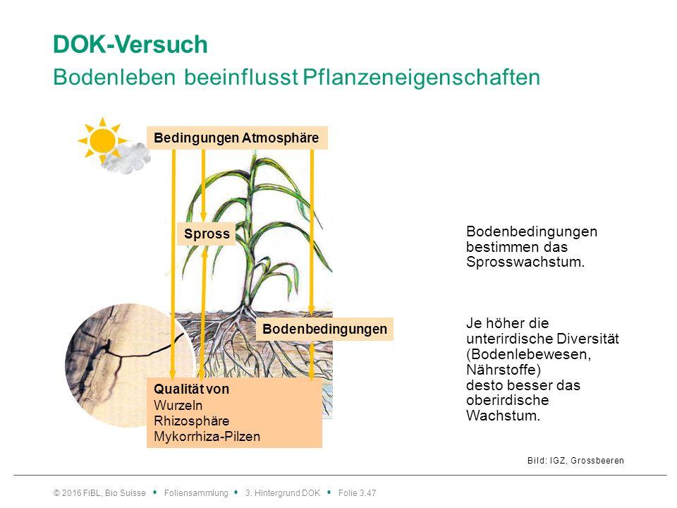 DOK-Versuch Bodenleben beeinflusst Pflanzeneigenschaften Bild: IGZ, Grossbeeren © 2016 FiBL, Bio Suisse Foliensammlung 3.