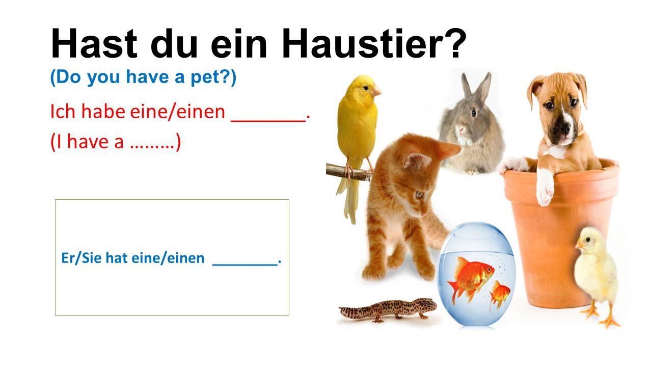 Hast du ein Haustier. (Do you have a pet ) Ich habe eine/einen _______.