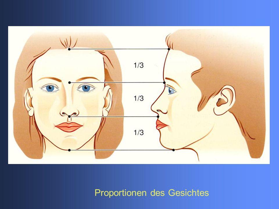 Proportionen des Gesichtes