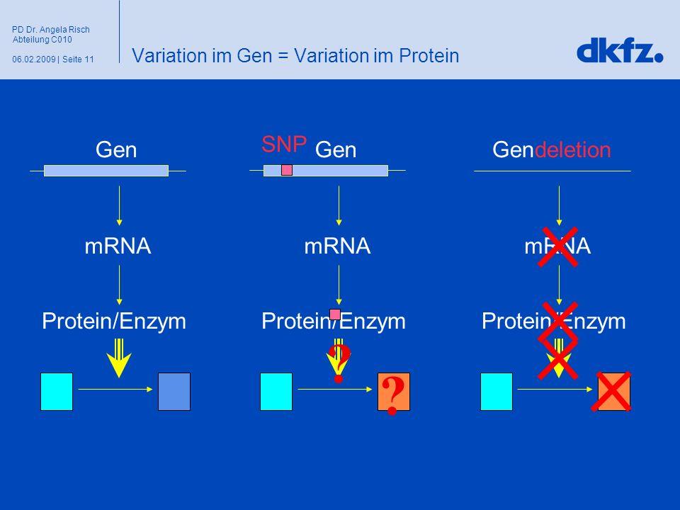Seite 1106.02.2009 | PD Dr. Angela Risch Abteilung C010 Variation im Gen = Variation im Protein Gen mRNA Protein/Enzym Gendeletion mRNA Protein/Enzym