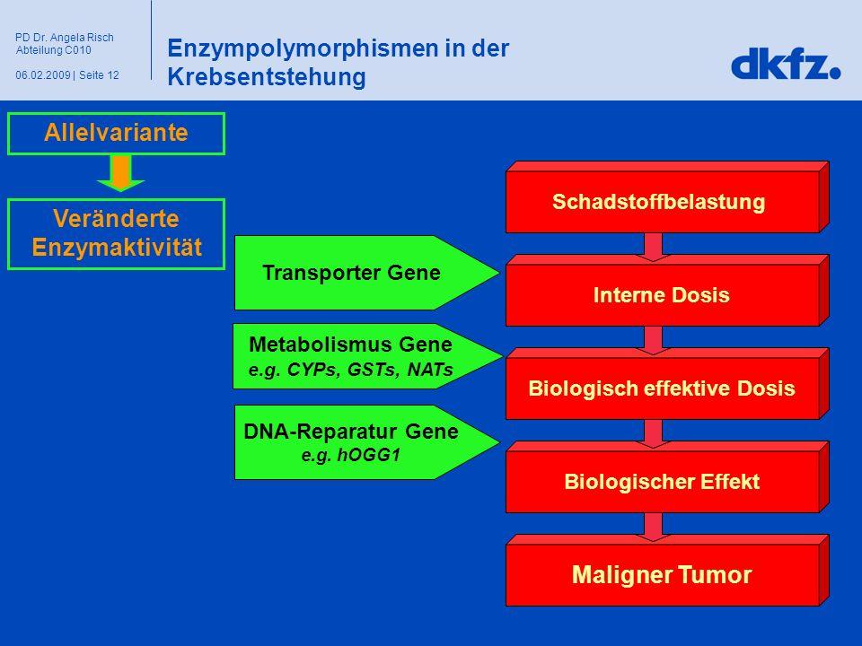 Seite 1206.02.2009 | PD Dr. Angela Risch Abteilung C010 Enzympolymorphismen in der Krebsentstehung Schadstoffbelastung Interne Dosis Biologisch effekt