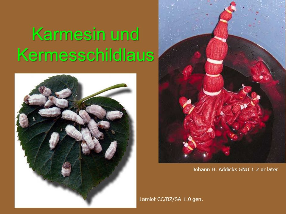 Karmesin und Kermesschildlaus Lamiot CC/BZ/SA 1.0 gen. Johann H. Addicks GNU 1.2 or later